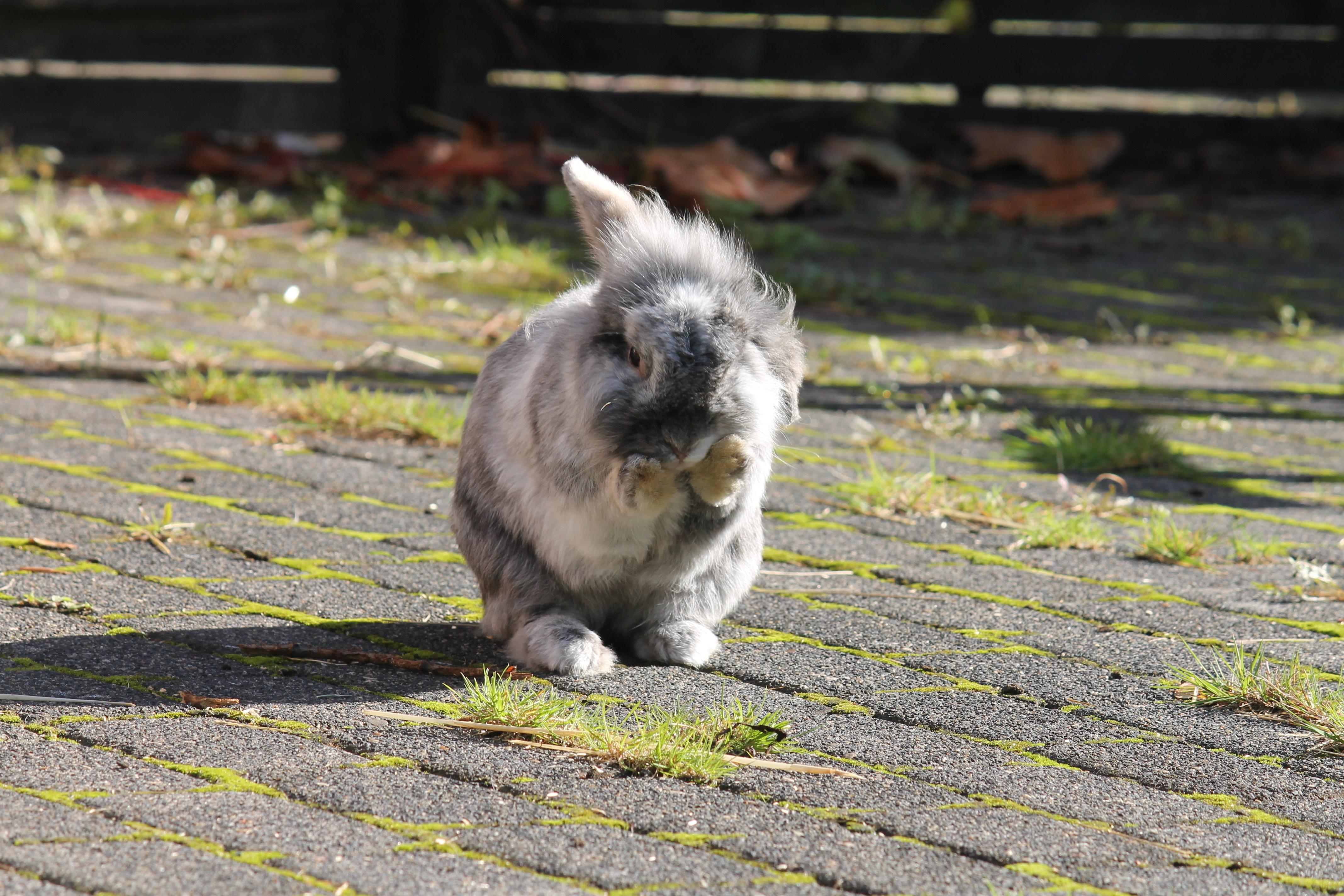 ERAVAC Impftag für Kaninchen